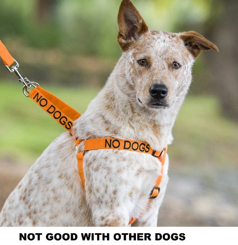 """""""NO DOGS"""" Orange Color Coded Non-pull Dog Harness (Not Good with Other Dogs) PREVENTS Accidents By Warning Others of Your Dog in Advance!, My Pet Supplies"""