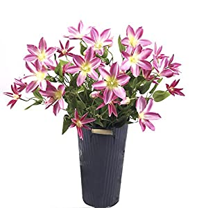 Artificial Clematis Flowers