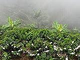Colombian Green Unroasted Coffee Beans 3- Pounds Single Origin Farm Barcelona