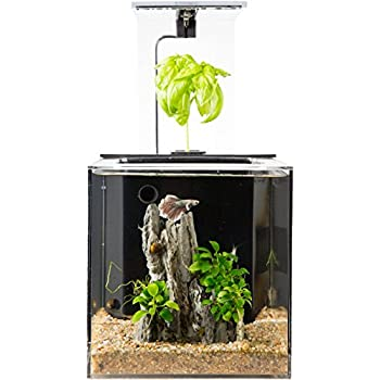 Ecoqube aquarium desktop betta fish tank for Betta fish tanks amazon
