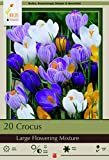Large Flowering Crocus Mix - 20 Bulbs - Best Seller - 8/9 cm Bulbs