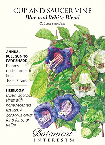 "Cup and Saucer Vine ""Blue and White Blend"" Heirloom Seeds"
