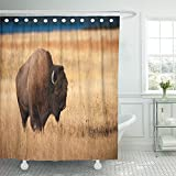 Emvency Shower Curtain With Hook Polyester Fabric Buffalo Bison During Fall Wild America Fur North Animal Big Herbivore Waterproof Adjustable Hook Sets 60 x 72 For Bathroom