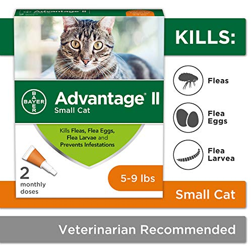 Flea Prevention for Cats, 5-9 lbs, 2 doses, Advantage II (Best Stuff To Kill Fleas)