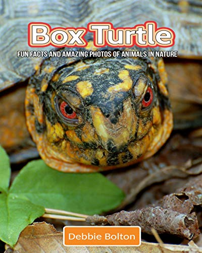 Box Turtle: Fun Facts and Amazing Photos of Animals for sale  Delivered anywhere in Canada