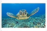 Tin Poster (20x30cm) of Turtle 13076 by Global Animal Sign
