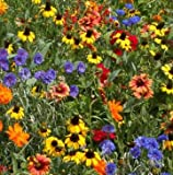 Florida Wildflower Seed Mix, 1/2 lb.