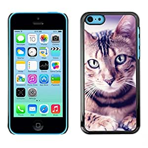 TopCaseStore / la caja del caucho duro de la cubierta de protección de la piel - Egyptian Mau Manx Ocicat Portrait Cat - Apple iPhone 5C