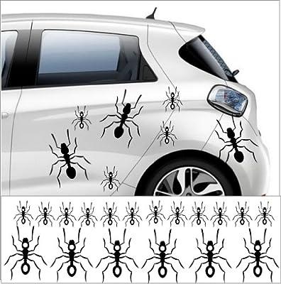 50 x hormigas