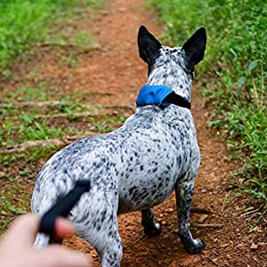 Nite Ize Raddog All-in-One Collar + Leash Combo Dog Collar with Built-in Retractable Leash 7