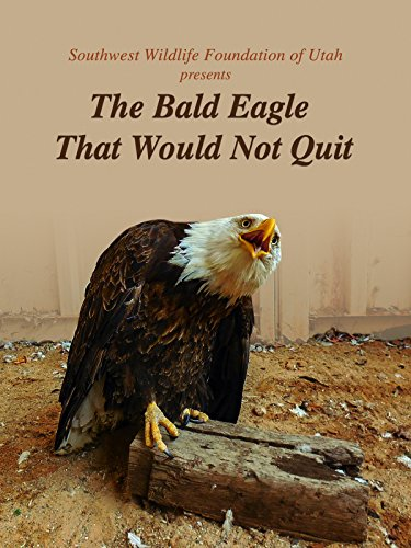 The Bald Eagle That Would Not Quit
