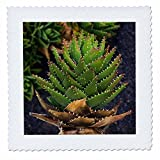 3dRose Danita Delimont - Cactus - Spain, Canary Islands, Lanzarote, Guatiza, spiky cactus - 16x16 inch quilt square (qs_257889_6)