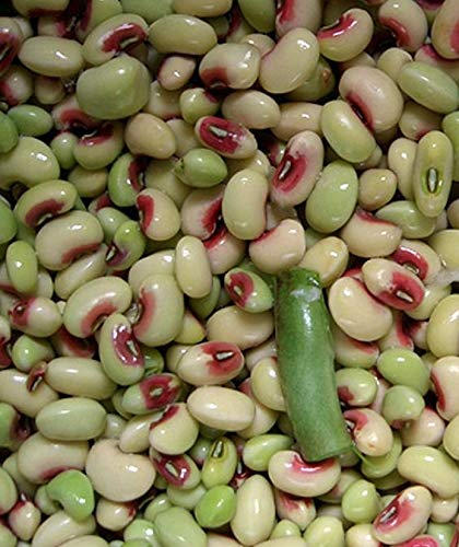 David's Garden Seeds Southern Pea (Cowpea) Quickpick Pinkeye SL9004 (Purple) 100 Non-GMO, Open Pollinated Seeds