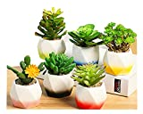 Byher 6 in Set 3 inch Ceramic Succulent Plant Pot,Hexagon (Pack of 6)