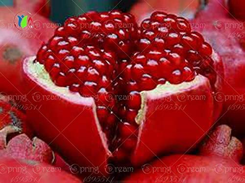 (50 Bonsai Tree Pomegranate Seeds Home Plant Delicious Fruit Seed Very Big and sw)