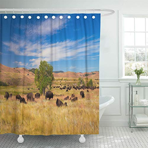 Semtomn Shower Curtain Buffalo Bison on Grasslands Custer State Park South Dakota Shower Curtains Sets with 12 Hooks 72 x 72 Inches Waterproof Polyester ()