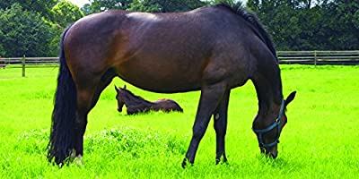 Mid-West/Mid-Atlantic Horse Pasture Seed Blend