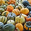 David's Garden Seeds Squash Winter Autumn Acorn Blend SL9052 (Multi) 25 Non-GMO, Open Pollinated, Heirloom Seeds