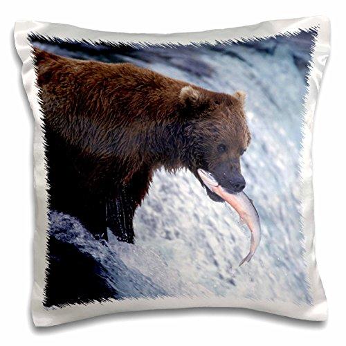 Danita Delimont - Bears - Alaska, Katmai, Brooks Fall. Brown