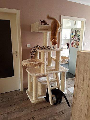 Rascador grandes gato XXL Crema Panther 12 cmØ kratz troncos de 100 x 60 x 173 cm y 62 kg Super Amazon Promo. Gatos (especialmente para grandes y pesados, ...