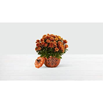 Amazon com : ProFlowers - Orange Pumpkin Harvest Mums - Indoor