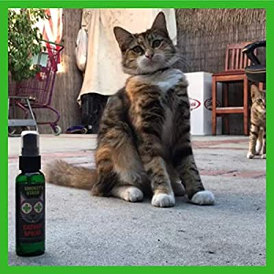 Catnip spray for cats, 51x9ort1AfL. SS400