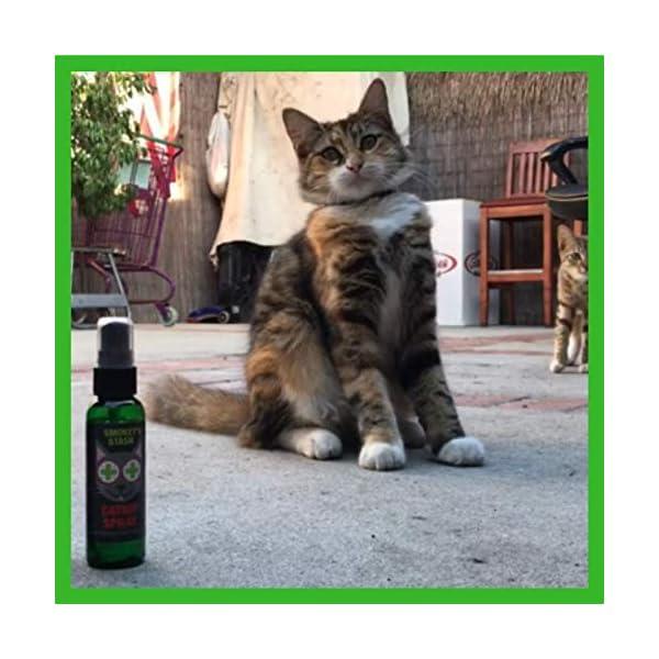Catnip spray for cats | Cat Crazy - Cat Products Shop | Kattengekte.com