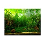 Aquarium Background Fish Tank Decorations Pictures PVC Adhesive Poster Water Grass Style Backdrop Decoration Paper Cling Decals Sticker(122 * 50cm)