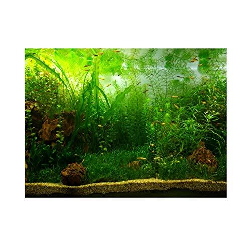 Most Popular Aquariums Backgrounds