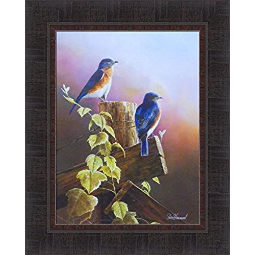 Framed Bird Pictures: Amazon.com