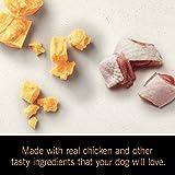 Cesar SUNRISE Wet Dog Food Chicken and Cheddar