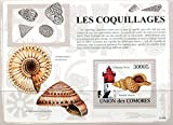 "Union of Comores: ""Les Coquillages"" Seashells and Lighthouse 2009 Souvenir Sheet with One Stamp, MNH"