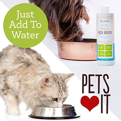 Oxyfresh Premium Pet Dental Care Solution (16oz): Best Way To Eliminate Bad Dog Breath & Cat Breath - Fights Tartar, Plaque & Gum Disease! - So easy, just add to water! Vet Recommended! - medicalbooks.filipinodoctors.org