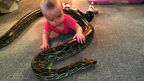 Baby Plays With Python (Ruby Python)