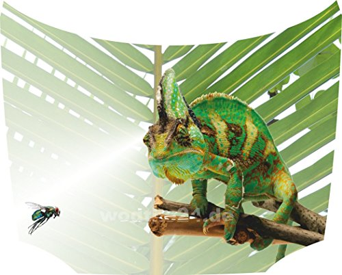 Bonnet Sticker Chameleon: