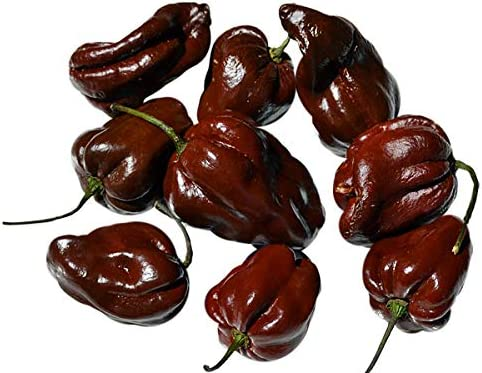 25 Premium Organically Grown Purple Bhut Jolokia Hot Pepper Seeds-O 030