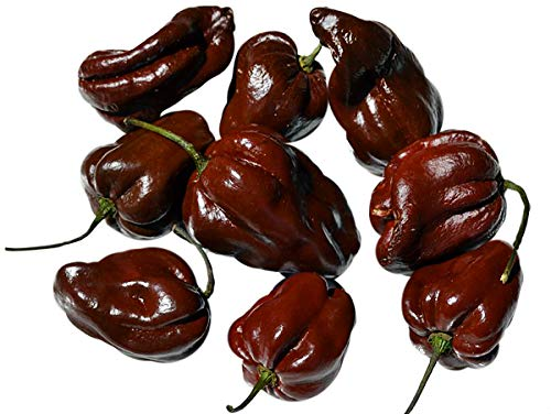 30+ ORGANICALLY Grown Chocolate Habanero Congo Hot Pepper Seeds Heirloom Non-GMO Rare, Chili, Spicy, Rich Flavor, Productive, from USA