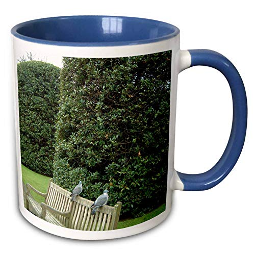 (3dRose Jos Fauxtographee- Hyde Park Love Birds - Two love Birds sitting on the back of a bench in Hyde Park London - 15oz Two-Tone Blue Mug (mug_292398_11))