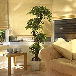 Vert Lifestyle Indoor Handmade Artificial Japanese Fruticosa Tree with Real Bark and Synthetic Leaves in Plastic Terracotta Pot - 165 cm Tall