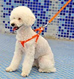 12 inch strap on with harness - No Pull Dog Leash Harness,HYSJY Pet Leash Rope,Pet Leash Strap,Nylon Leash Collar with Adjustable-Best for Walking, Hiking & Training Canine fit Medium/Small Pet(Medium, Orange)