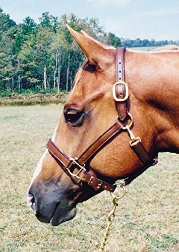 TORY LEATHER Cob Halter - Crown Buckle & Brass ()