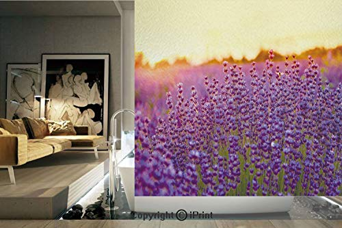 (Decorative Privacy Window Film/Lavender Field in Summer near Tihany Hungary Agriculture Harvest Scent Aroma Decorative/No-Glue Self Static Cling for Home Bedroom Bathroom Kitchen Office Decor Violet)