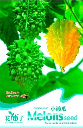 New Momordica Charantia Balasam Pear Herb Vegetable, Original Pack 6 ''Seed/Pack, Bitter Melon