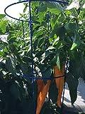"Glamos 243093 Garden Plant Support, Medium/14"" x"