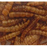Mealworms (2 oz)