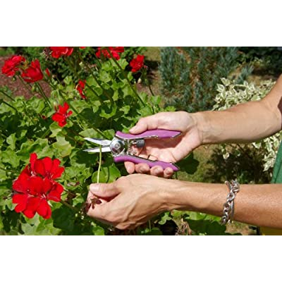 Dramm 18026 Stainless Steel Compact Shear, Berry : Hedge Shears : Garden & Outdoor