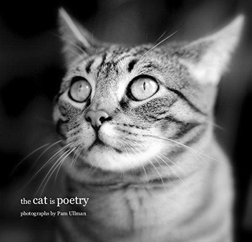 Read Online the cat is poetry ebook
