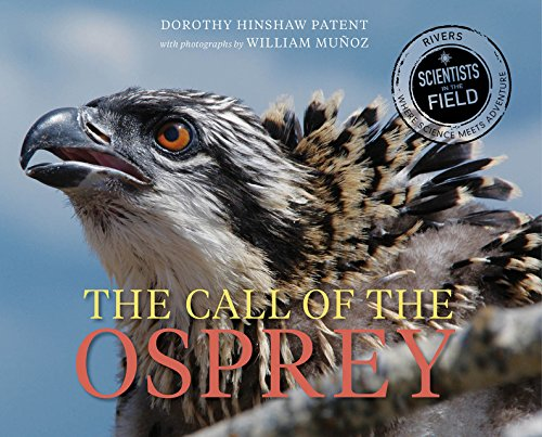 the-call-of-the-osprey-scientists-in-the-field-series
