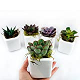 NW Wholesaler - Set of 50 or 100 Live Succulents with Moss and Pots for Wedding Favors, Party Favors or Succulent Gardens (50)