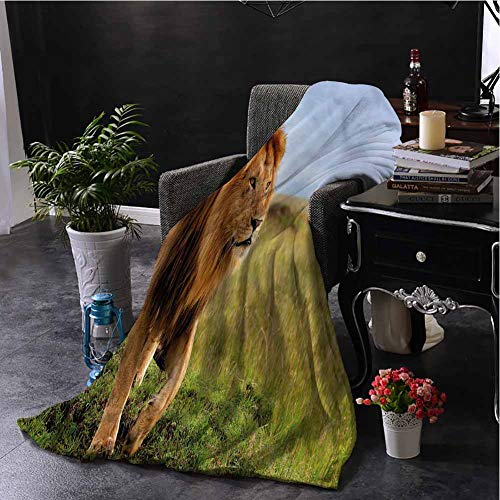 Lion Luxury Special Grade Blanket Animal on Masai Mara Kenya Multi-Purpose use for Sofas etc. W80 x L60 Inch (Sofa Kenya)